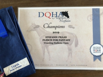DQHA NRW Champion Weanling Stallions